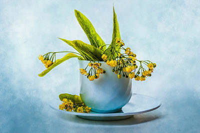 Linden Tree Flowers In A Teacup Poster by Alexander Senin