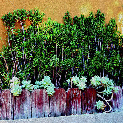 Line Of Succulents And Red Fence Poster