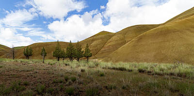 Line Of Trees At Painted Hills Poster by Jean Noren