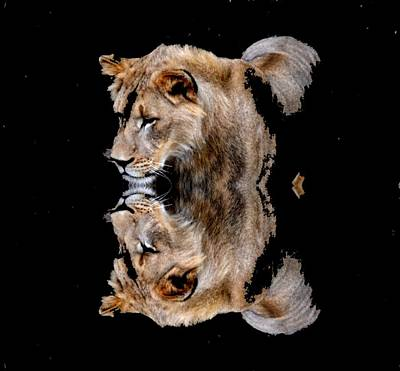 Lion And It's Reflection Poster by Anand Swaroop Manchiraju