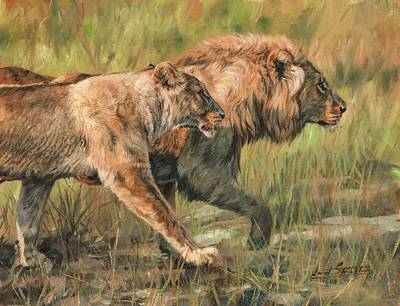 Lion And Lioness Poster by David Stribbling
