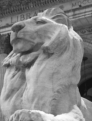Lion At New York Public Library Poster