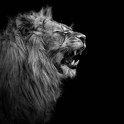 Lion In Black And White Poster by Lukas Holas