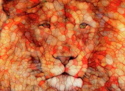 Lion  Poster by Jack Zulli