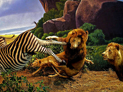 Lions Attack Zebra Poster by Bob Welch