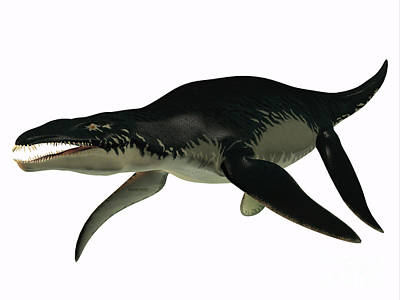 Liopleurodon Side Profile Poster by Corey Ford