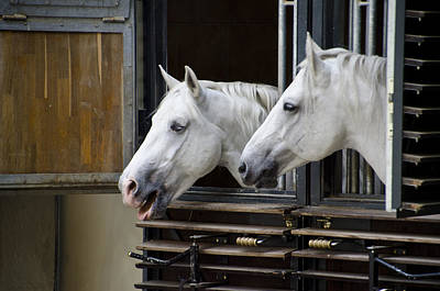 Lipizzan Horses - Vienna Austria Poster by Jon Berghoff