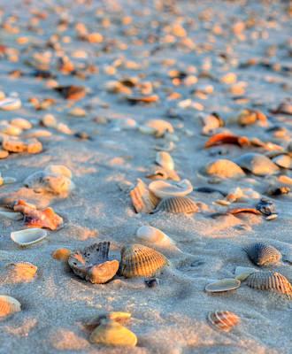 Litter On The Beach Poster