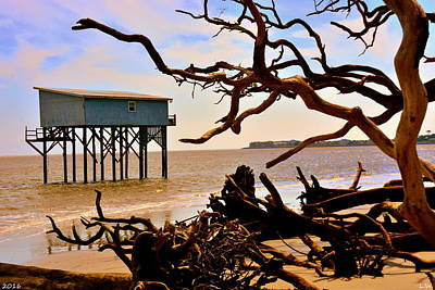 Poster featuring the photograph Little Blue Hunting Island State Park Beaufort Sc by Lisa Wooten