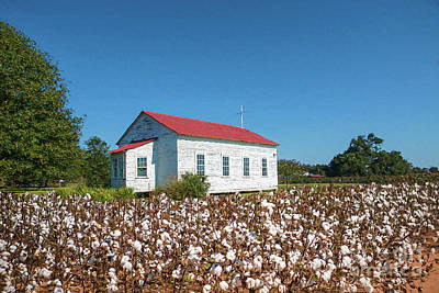 Little Church In The Cotton Field Poster by Bonnie Barry