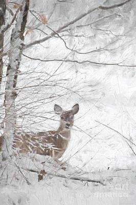 Little Doe In Snow Poster by Benanne Stiens