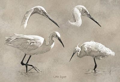 Little Egret Poster