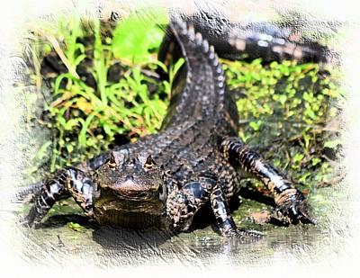 Little Gator 1 Poster