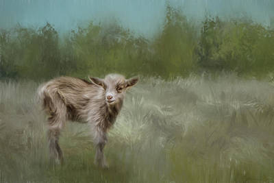 Little Goat In A Big World Poster