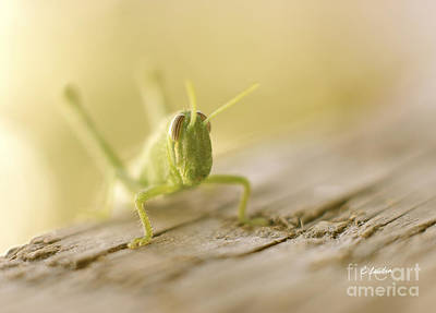 Little Grasshopper Poster by Claudia Ellis