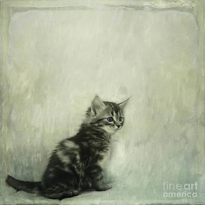 Little Kitty Poster by Priska Wettstein