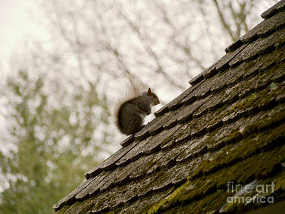 Little Squirrel On A Rooftop Poster