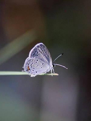 Little Teeny - Butterfly Poster