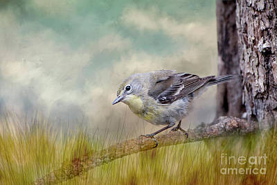 Little Warbler In Louisiana Winter Poster by Bonnie Barry