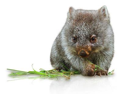 Little Wombat Poster