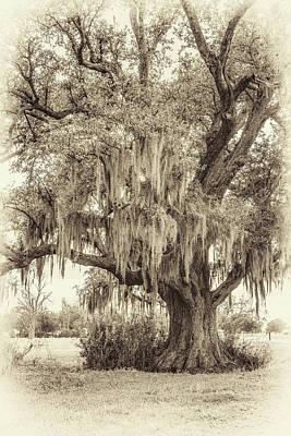 Live Oak And Spanish Moss Sepia Poster by Steve Harrington