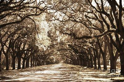 Live Oak Lane In Sepia Poster by Carol Groenen