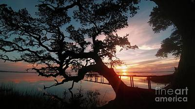 Poster featuring the photograph Live Oak Sunrise by Benanne Stiens