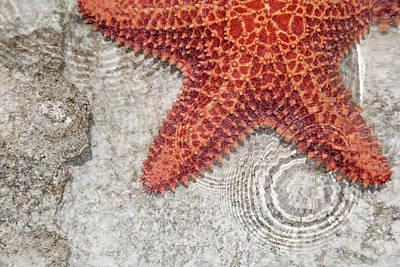 Live Starfish Natural Habitat Poster