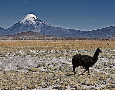 Poster featuring the photograph Llama And Sajama by Ron Dubin