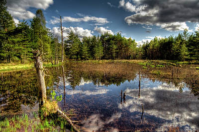 Poster featuring the photograph Lochan Close To Loch Garten by Gabor Pozsgai