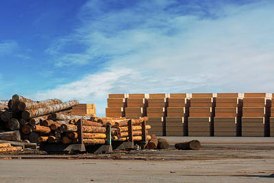 Logs And Plywood At Lumber Mill Poster