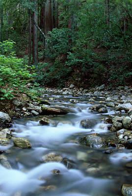 Logwood Creek - Ventana Wilderness Poster