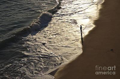 Lone Beach Walker 2 Poster by Angelo DeVal