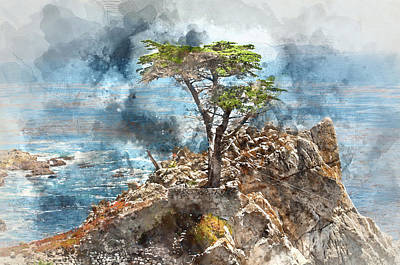 Lone Cypress In Monterey California Poster