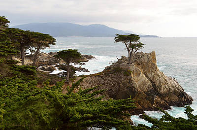 Lone Cypress Large Poster by Barbara Snyder