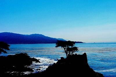 Lone Cypress Tree - Pebble Beach Ca Poster