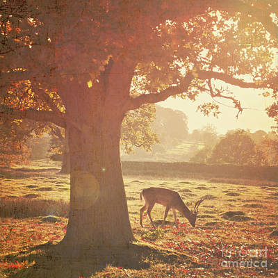 Poster featuring the photograph Lone Deer by Lyn Randle