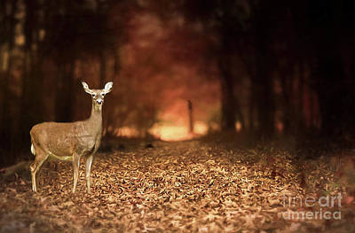 Poster featuring the photograph Lone Doe by Darren Fisher
