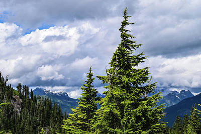 Lone Fir With Clouds Poster