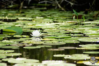 Lone Flower On Lake Poster