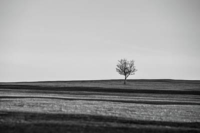 Lone Hawthorn Tree Iv Poster