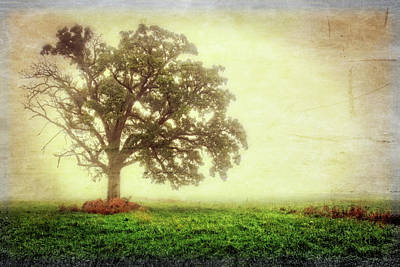 Lone Oak Tree In Fog Poster by Jennifer Rondinelli Reilly - Fine Art Photography