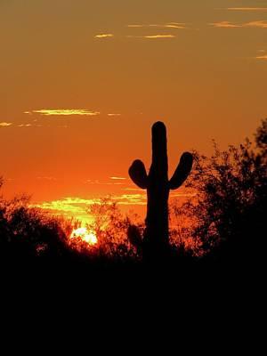 Lone Saguaro Sunrise Poster