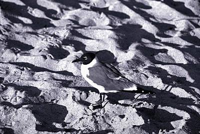 Lone Seagull Poster by Gary Dean Mercer Clark