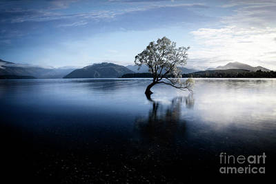 Poster featuring the photograph Lone Tree 2 by Scott Kemper