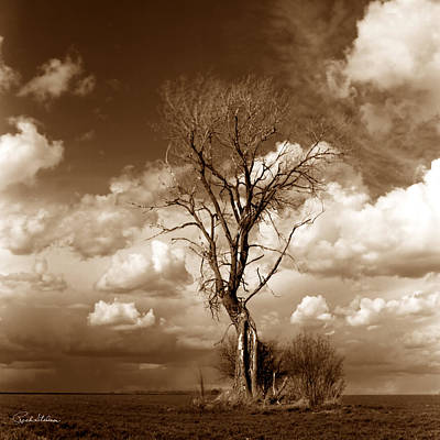Lone Tree- Brown Tone Poster