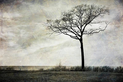 Lone Tree By The Lake Poster