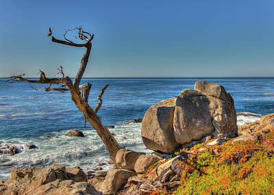 Lone Tree California Coast Poster by James Hammond