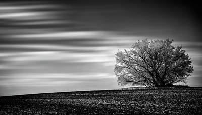 Poster featuring the photograph Lone Tree by Dan Jurak
