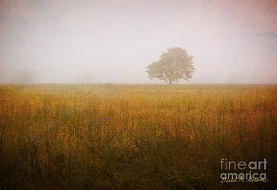 Lone Tree In Meadow No. 2 Poster by Dave Gordon